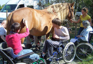 L'attelage et l'équitation pour tous